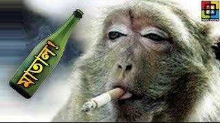 হাস্যকর টালমাটাল জন্তুগুলো দেখে না হেসে থাকুন তো দেখি | Funny Animal, Try not to Laugh
