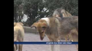 Бродячих собак больше не будет?(По Одессе бродят 20 тысяч бездомных собак. И это только по официальным данным. Четвероногих из центра города..., 2013-02-08T17:20:45.000Z)