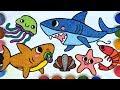 Gambar cover Baby shark   Menggambar dan mewarnai Mainan Bayi hiu untuk anak anak   Pinkfong Baby shark family