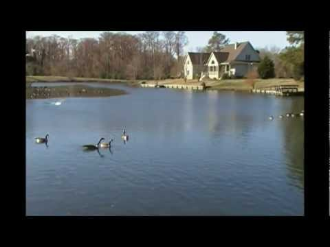 Hunting: Edenton, NC city limits Subdivision