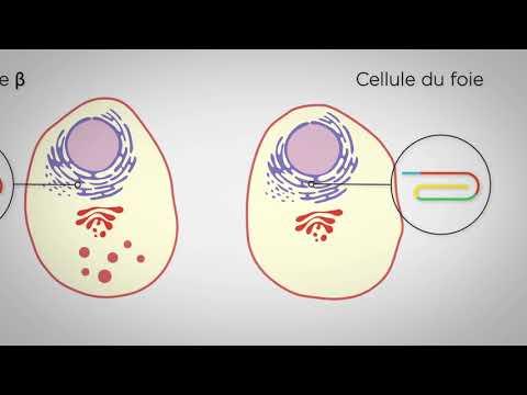 MOOC : Introduction à la biologie systémique de la cellule