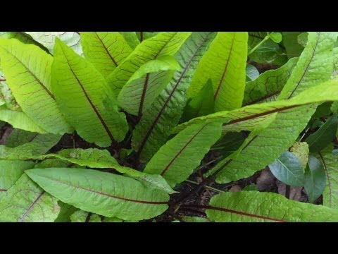 Growing More Perennial Vegetables and Herbs