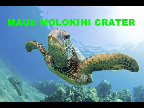 Maui Hawaii - Molokini Crater Sea Turtles Snorkel Underwater - Trilogy Excursions