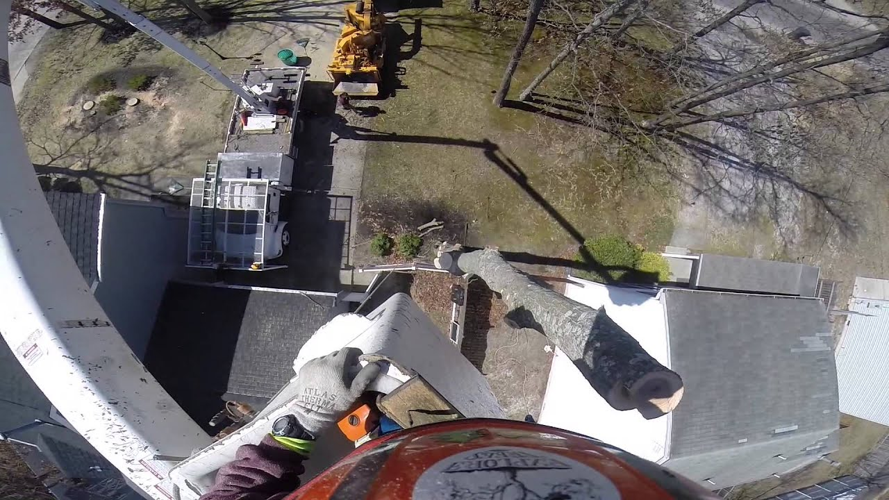Tree Removal With 65ft Bucket Truck