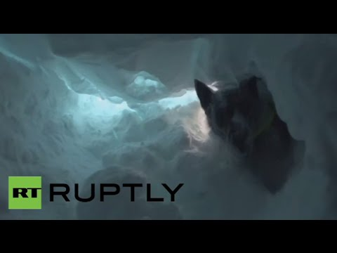 Avalanche rescue dogs put to the test in Austria