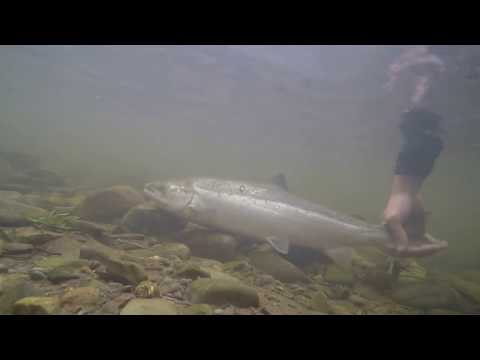 Spinning For Salmon In The Lake District