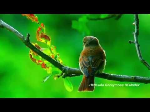 Нежная музыка для души и жизни, а пение птиц успокаивает нервную.