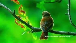 Download Нежная музыка для души и ЖИЗНИ, а Пение птиц Успокаивает нервную систему. Mp3 and Videos