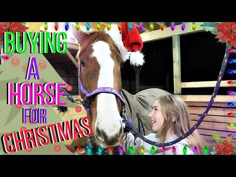 Download Youtube: BUYING A HORSE FOR CHRISTMAS Day 317 (11/15/17)