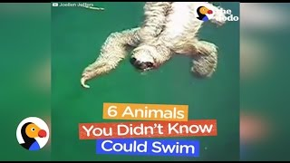 Animals You Didn't Know Could Swim | The Dodo