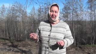 видео Лечебные свойства березы повислой бородавчатой. Как примененить настой листьев березы и использовать ее ветки.