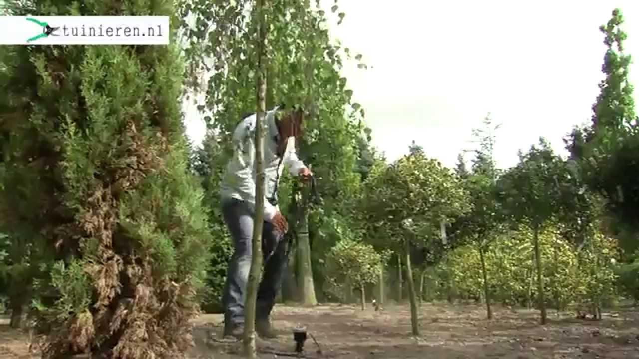Elektra Aanleggen Tuin : Hoe kan ik zelf tuinverlichting aanleggen tuinieren youtube
