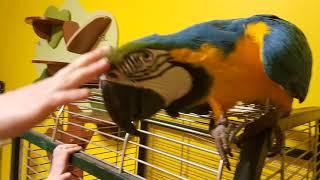 Большой попугай и ребенок