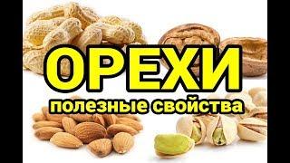 Самые популярные орехи и их полезные свойства