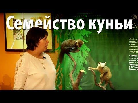 Вопрос: Какой зверь из семейства куньих считается самым крупным, почему?