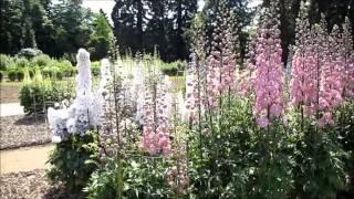 Delphinium Trial - RHS Wisley Garden 2013