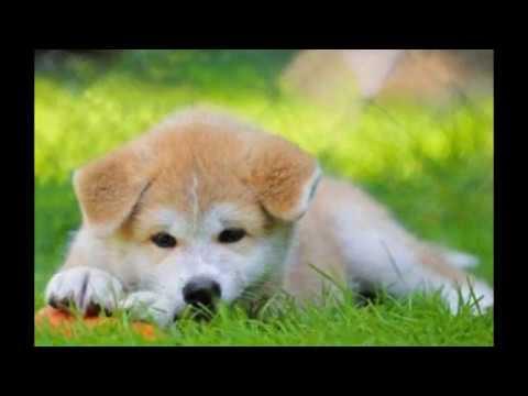 5 Razze Di Cani Carini Youtube