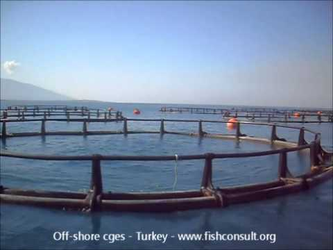 Off-shore marine cages in Turkey