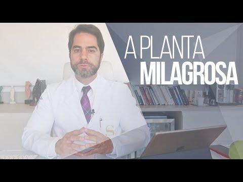 MORINGA OLEÍFERA   INCONTÁVEIS BENEFÍCIOS