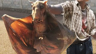 10 Most Bizarre Recently Discovered Species!