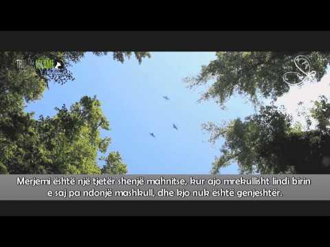 Realiteti i Universit - Ilahi e mrekullueshme me titra shqip - HD