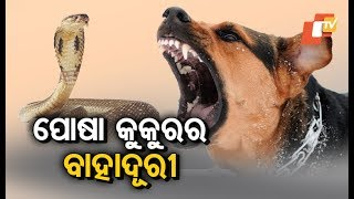 Dog jumps in to save family from cobra in Bhubaneswar