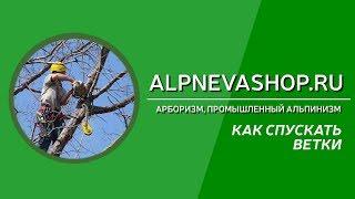 видео Как правильно срубить дерево: советы профессионала-арбориста! -Статьи