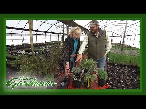 Sound Plant Advice | Volunteer Gardener