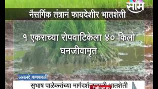 Konkan: Need to employ natural farming technology in rice farming