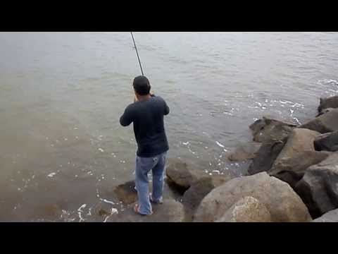 Fishing Tiger Stingray in Miri Sarawak Rivermouth