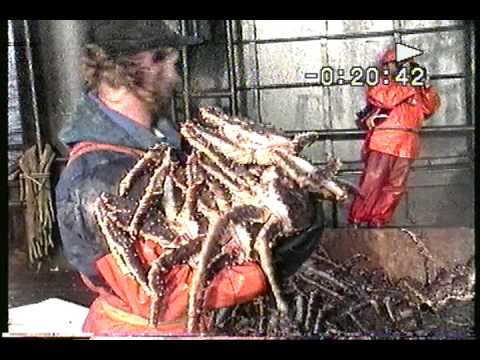 Bering Sea King Crab Fishing: Loading up with Red King Crab