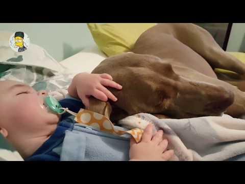 아기와 교감하는 사랑스런 강아지 영상 모음 #2