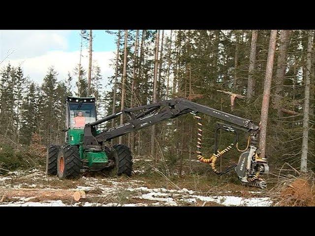 Разработки белорусских лесоводов востребованы за рубежом