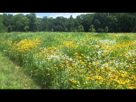 Flint Hill Wildflowers