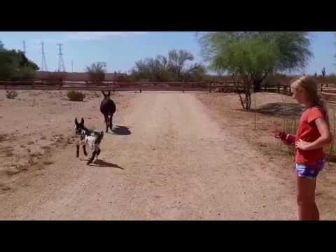 Baby Donkey Runs for the First Time [cutest animals cute baby animals]
