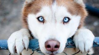 О чём думает ваша собака ?