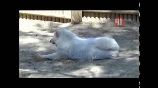 Солнечный удар у животных