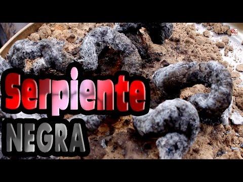 Serpiente negra -  │ Experimento Fácil