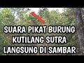 Suara Pikat Burung Kutilang Sutra Mantap Langsung Di Sambar Jernih  Mp3 - Mp4 Download