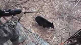When Bears Go Wild thumbnail