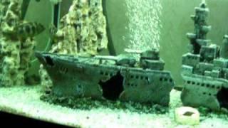 продам аквариум(нафоруме http://www.aqa.ru/forum/vt167479p1., 2010-09-05T05:17:14.000Z)