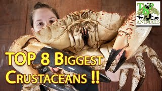 Top 8 Biggest Crustaceans !