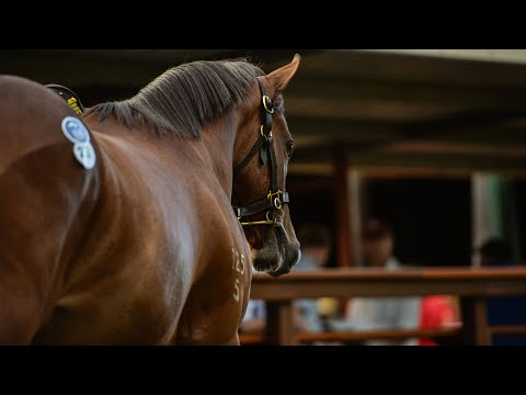 2018 Gold Coast March Yearling Sale - Day 1 (Live Stream Archive)