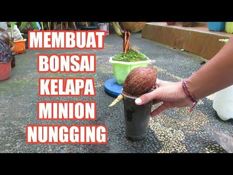 Membuat Bonsai Kelapa Minion Nungging Youtube