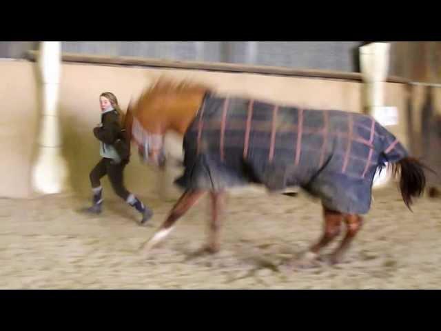 Attention, cheval débile !♥