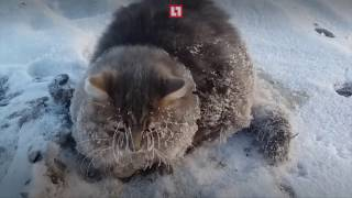 Cat Frozen on ice. Exclusive Rescue personnel