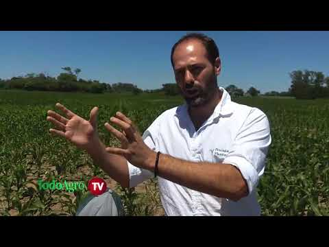 Prestaciones de la compañía PrecisionPlanting para hacer más eficiente la siembra de cultivos.