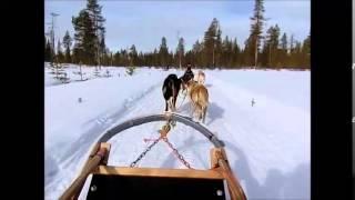 サーリセルカで犬ぞり体験♪思ったよりもスゴイスピードにビックリしました.