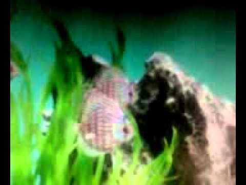 Fish Live Wallpaper For Windows Xp