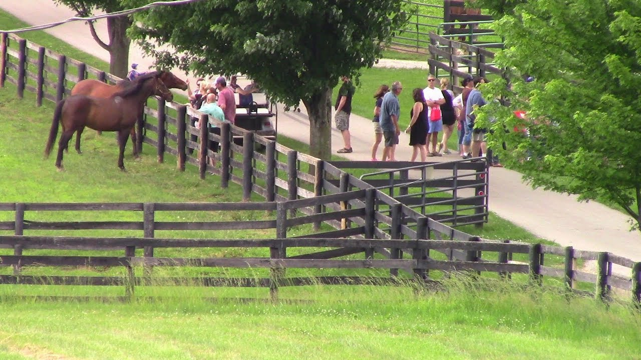 Thoroughbred Retirement Farm Come Visit Old Friends Farm Youtube